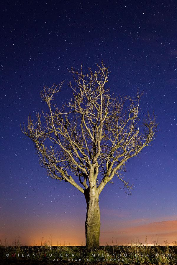 The Night of Wonders