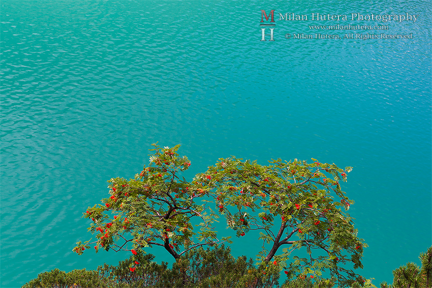 Buckthorn Bush and Lago de Braies