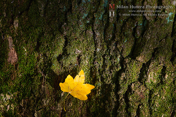 Leaf and the Bark