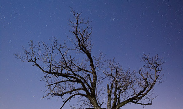 Moon-lit