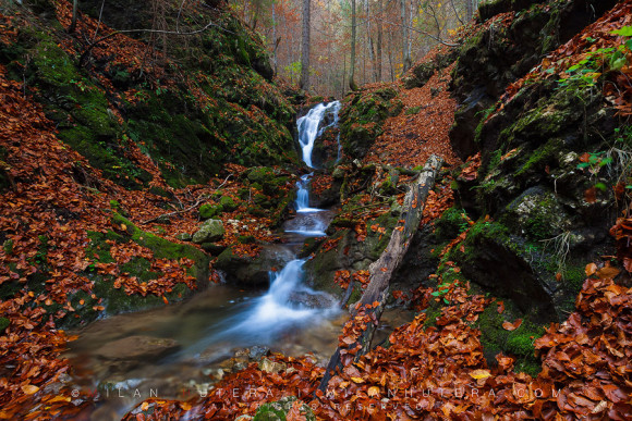 Waterfall and Fallen Leaves