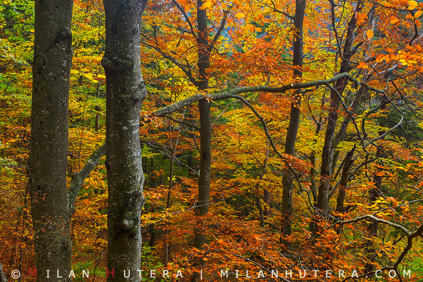 Peak of Fall, Kvacany Valley, Slovakia