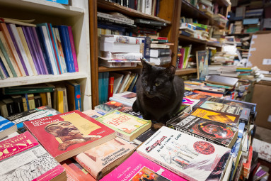 A black cat guards the books in the famous venetian bookstore.