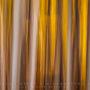 Autumnal Blur
