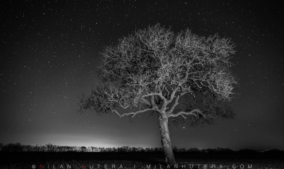 Monochrome Night