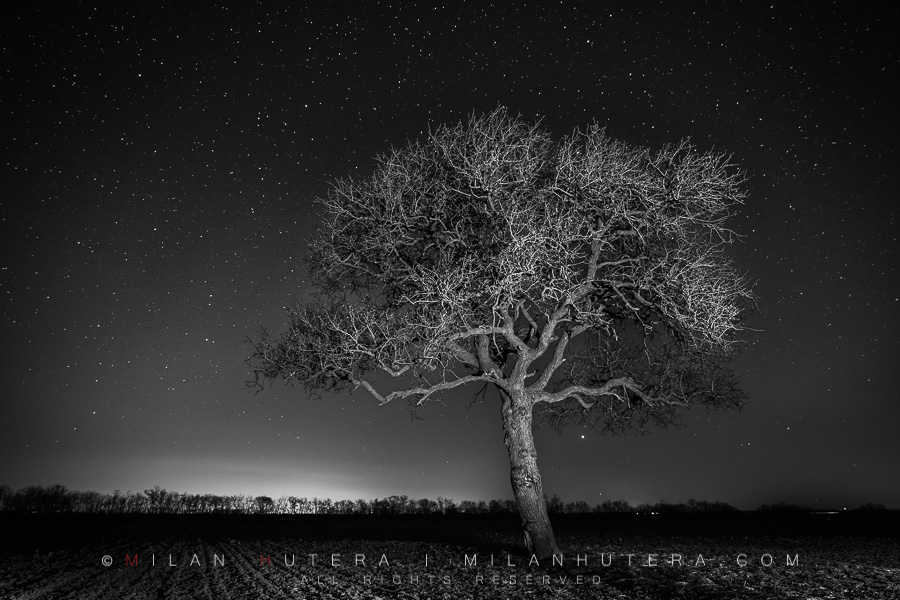 A monochrome rendition of a lone tree under the dark starry sky. A LED flash light was used to lightpaint the tree and foreground.