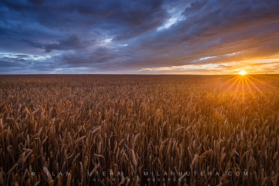 A rare wind-free moment of the Spring season of 2017 on the wheat field just before the Sun dips under the horizon.