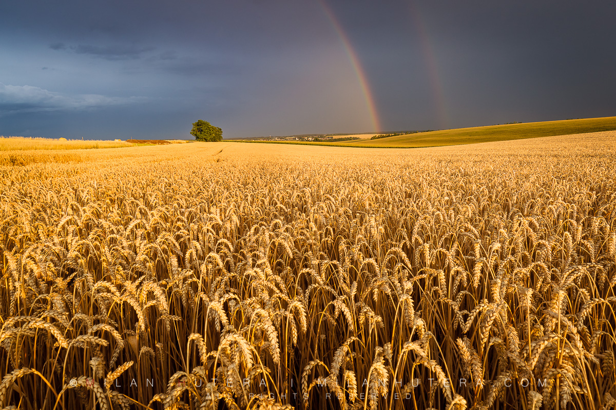 An incredible display of storm light between two summer storms on a golden wheat field. The setting Sun formed a beautiful double rainbow just as another storm was approaching my location.