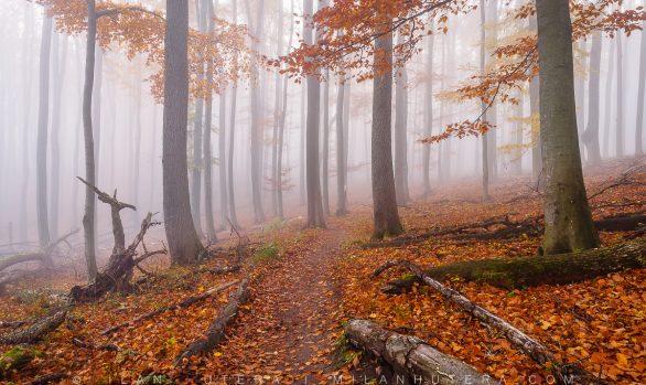 Misty Stroll, Little Carpathians, Slovakia