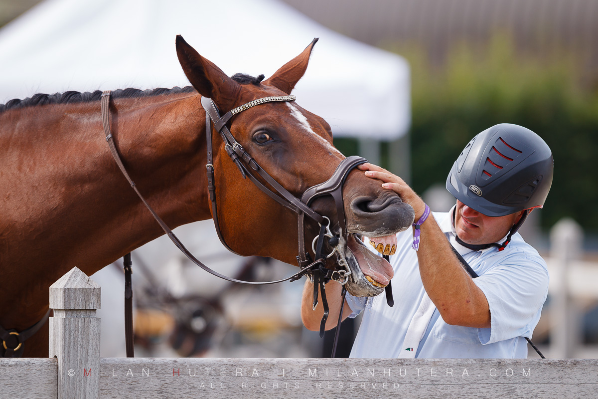 A funny moment of horse teeth cleaning during X-Bionic Summer Tour 2018, held in beautiful X-Bionic Equestor Sphere in Samorin, Slovakia