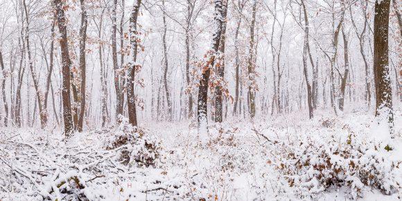 Winter Wonderland, Nitra Region, Slovakia