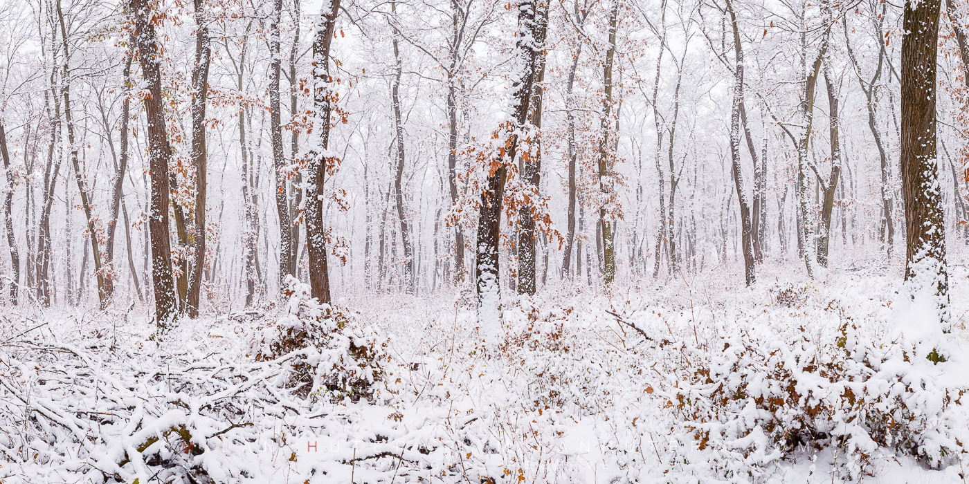 A large amount of snow falls into a deciduous forest close to my home. A long lasting snow cover has become a rarity in our part of country, so I seized the opportunity and went to make the photo as soon as possible. It was actually still snowing!